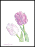 Poster: Purple tulips, by Yvonnes galleri