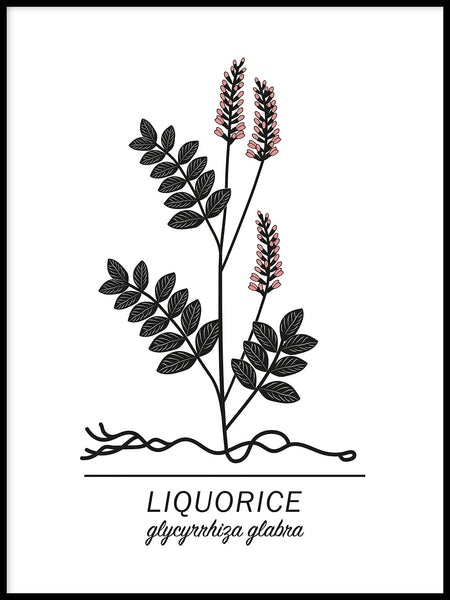 Poster: Liquorice, by Paperago