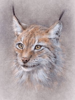 Poster: The secret of the Lynx, by Discontinued products