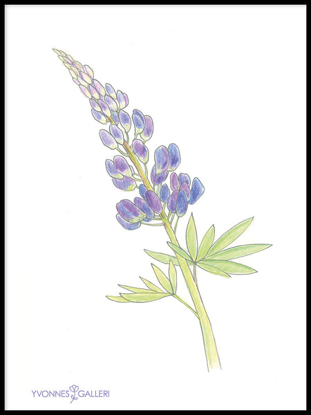 Poster: Lupine, by Yvonnes galleri
