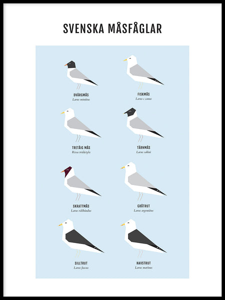 Poster: Gulls, by My Dalen