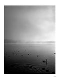 Poster: Misty Lake I, by Discontinued products
