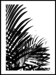 Poster: Palm Leaves I, by Wintherland
