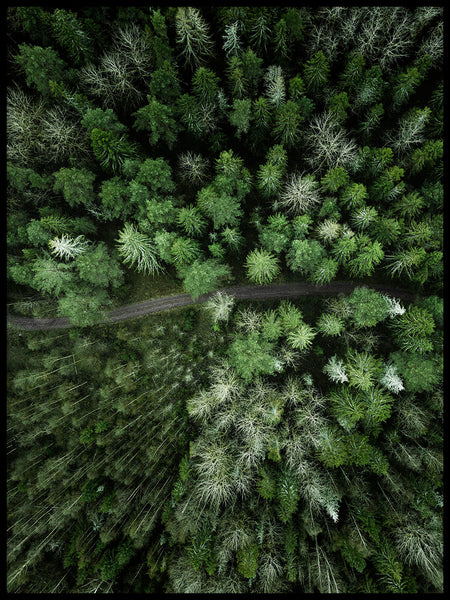 Poster: Path in forest, by Patrik Larsson