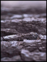 Poster: Pine bark, by Fotastiskt Art