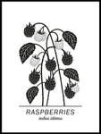 Poster: Raspberries, by Paperago