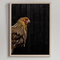 Poster: Rooster, by Discontinued products
