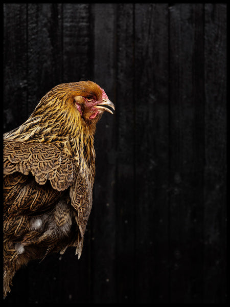 Poster: Rooster, by Nils Levin