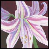 Poster: Pink amaryllis, by Yvonnes galleri