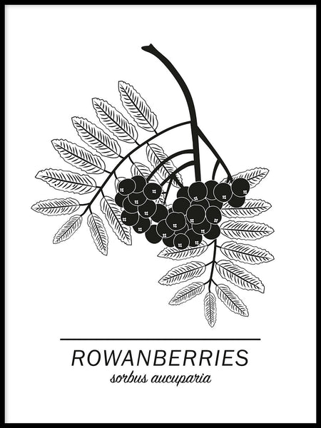 Poster: Rowanberries, by Paperago