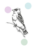 Poster: Waxwing, by Discontinued products