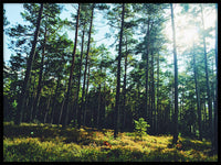 Poster: Forests of Småland, by Discontinued products