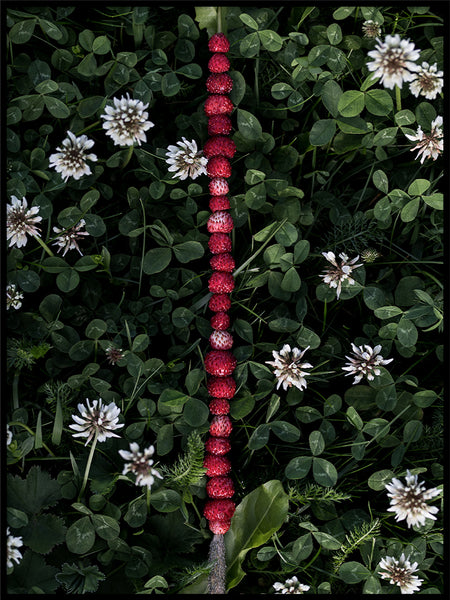 Poster: Wild strawberries, by EMELIEmaria