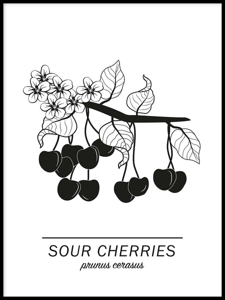 Poster: Sour Cherries, by Paperago