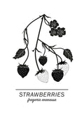 Poster: Strawberries, by Paperago