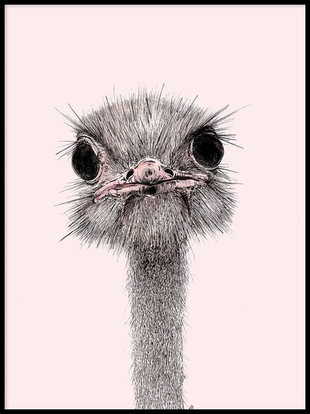 Poster: Ostrich, by Ida Maria