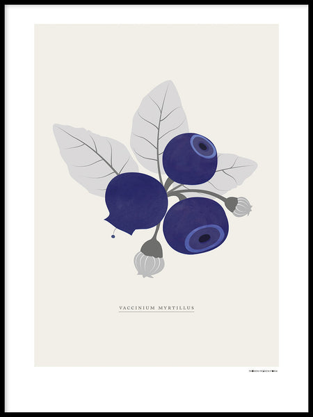 Poster: Swedish berries, blueberries, by Fröken Fräken Form