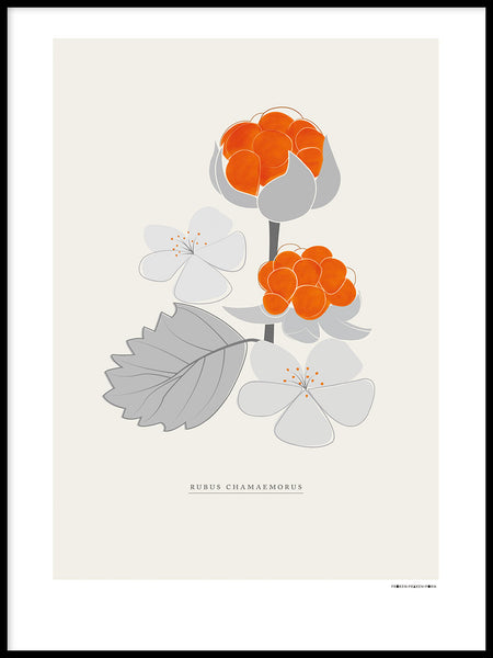 Poster: Swedish berries, cloudberries, by Fröken Fräken Form