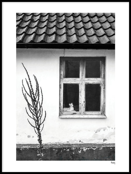 Poster: FALSTERBONÄSET - The Cat in the window, by A chapter 5 - Caro-lines