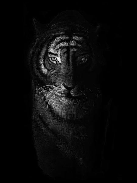 Poster: Tiger in the dark, by Per Svanström