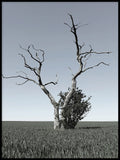 Poster: Lonely Tree, by Richard Ric Karlsson