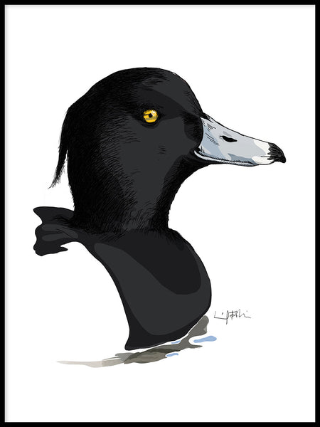 Poster: Tufted duck, by Ingrid Fröhlich