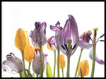 Poster: Tulips, by Vesa Aaltonen Photography