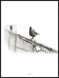 Poster: Two Birds, by Ingrid Kraiser - ingrid art design
