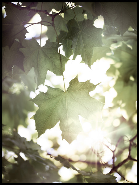 Poster: Under the maple tree, by EMELIEmaria