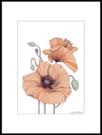 Poster: Poppy Coral, by Discontinued products