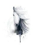 Poster: White Icelandic horse, by Cora konst & illustration