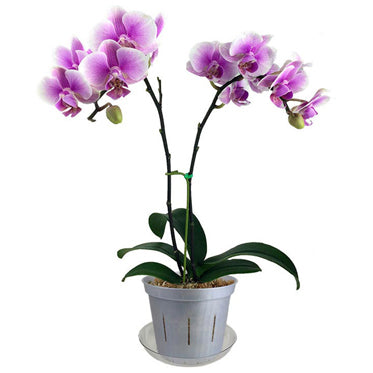Orchid Identification - What Kind of Orchid Do I Have? – rePotme