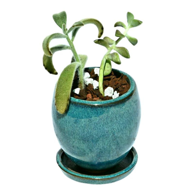 "3"" Teal Jade Ceramic Succulent Pot - Elliptical Elegance"