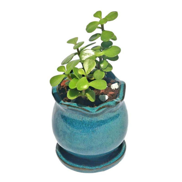 "2"" Teal Jade Ceramic Succulent Pot - Blooming Tulip"
