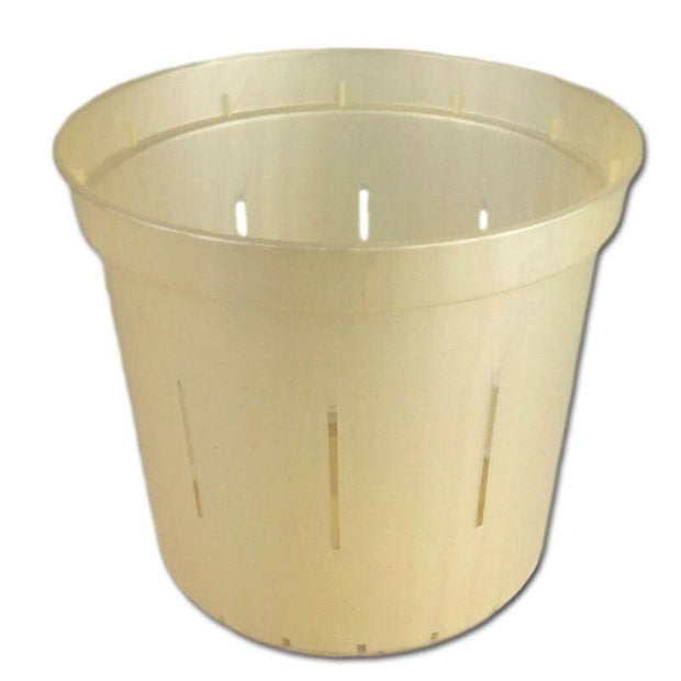 "6"" Golden Creme Slotted  Orchid Pot"