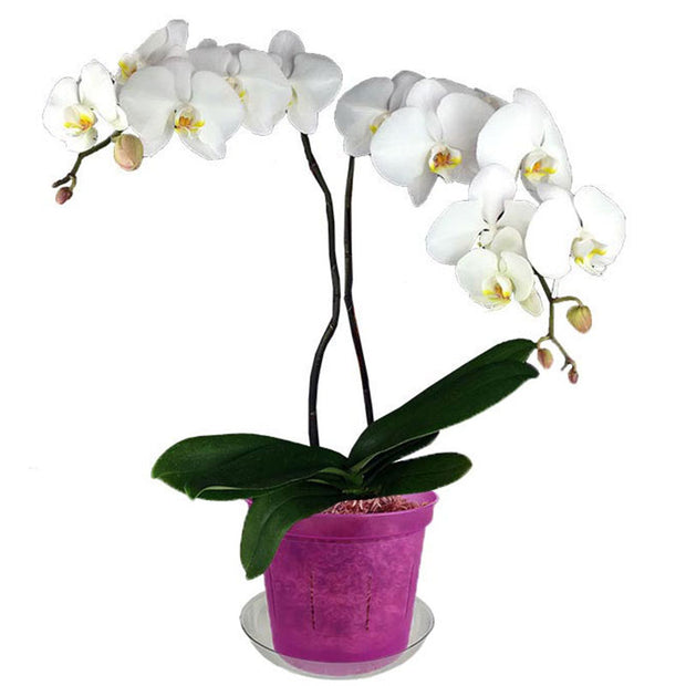 "6"" Wild Orchid Slotted  Orchid Pot"