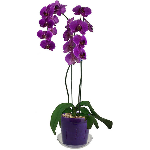 "6"" Purple Amethyst Slotted  Orchid Pot"