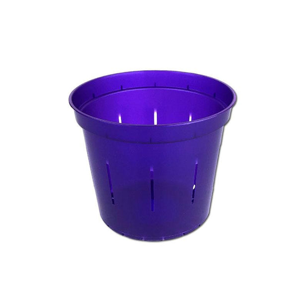 Purple Amethyst Slotted Violet Pot - 3 Inch - Slot-Pots