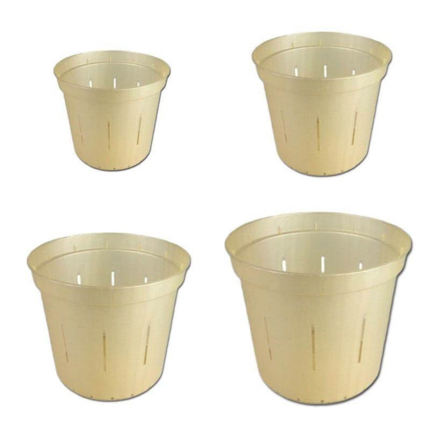 Growers Assortment of Golden Creme Slotted Orchid Pots