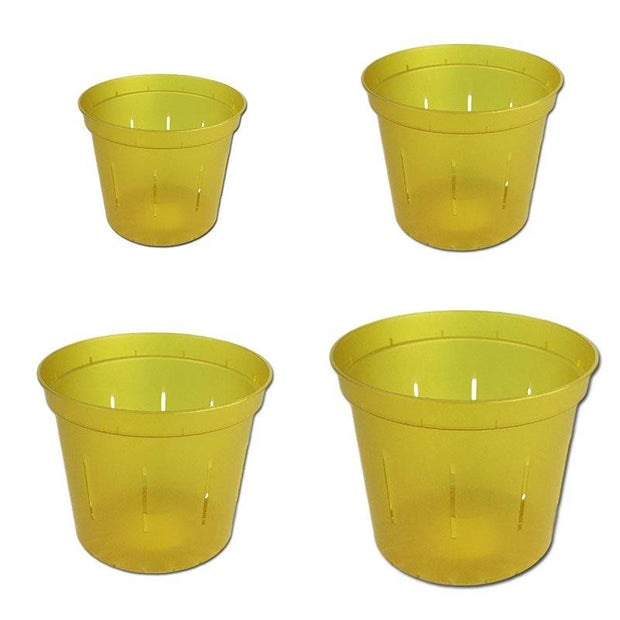 Yellow Topaz Slotted Violet Pot - Growers Assortment Of 4 - Slot-Pots