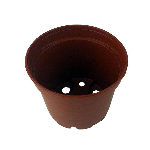 2.5 Miniature Plastic Violet Pot - Terracotta