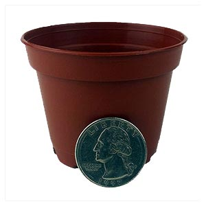 "1.5"" Miniature Plastic Violet Pot - Terracotta"