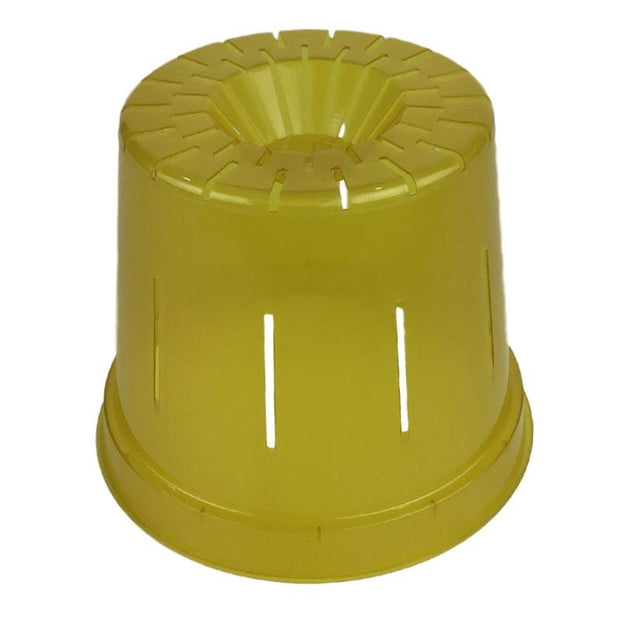 Yellow Topaz Slotted Violet Pot - Slot-Pots