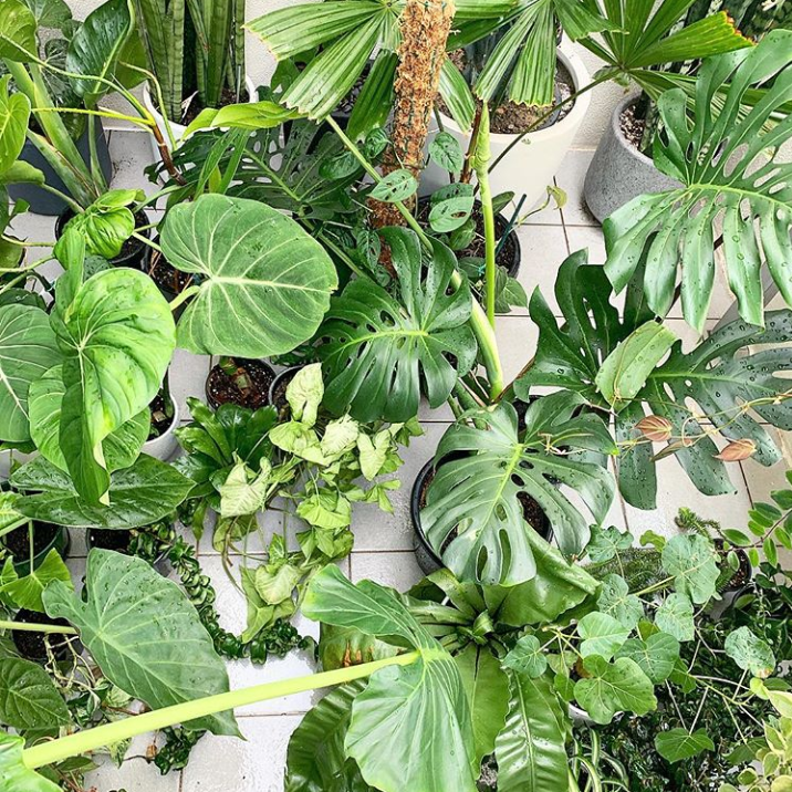 Four gadgets to keep the plant fam happy (and won't break the bank)