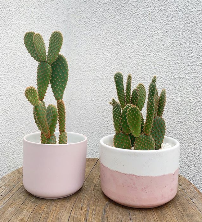 How to keep your cacti & succs happy