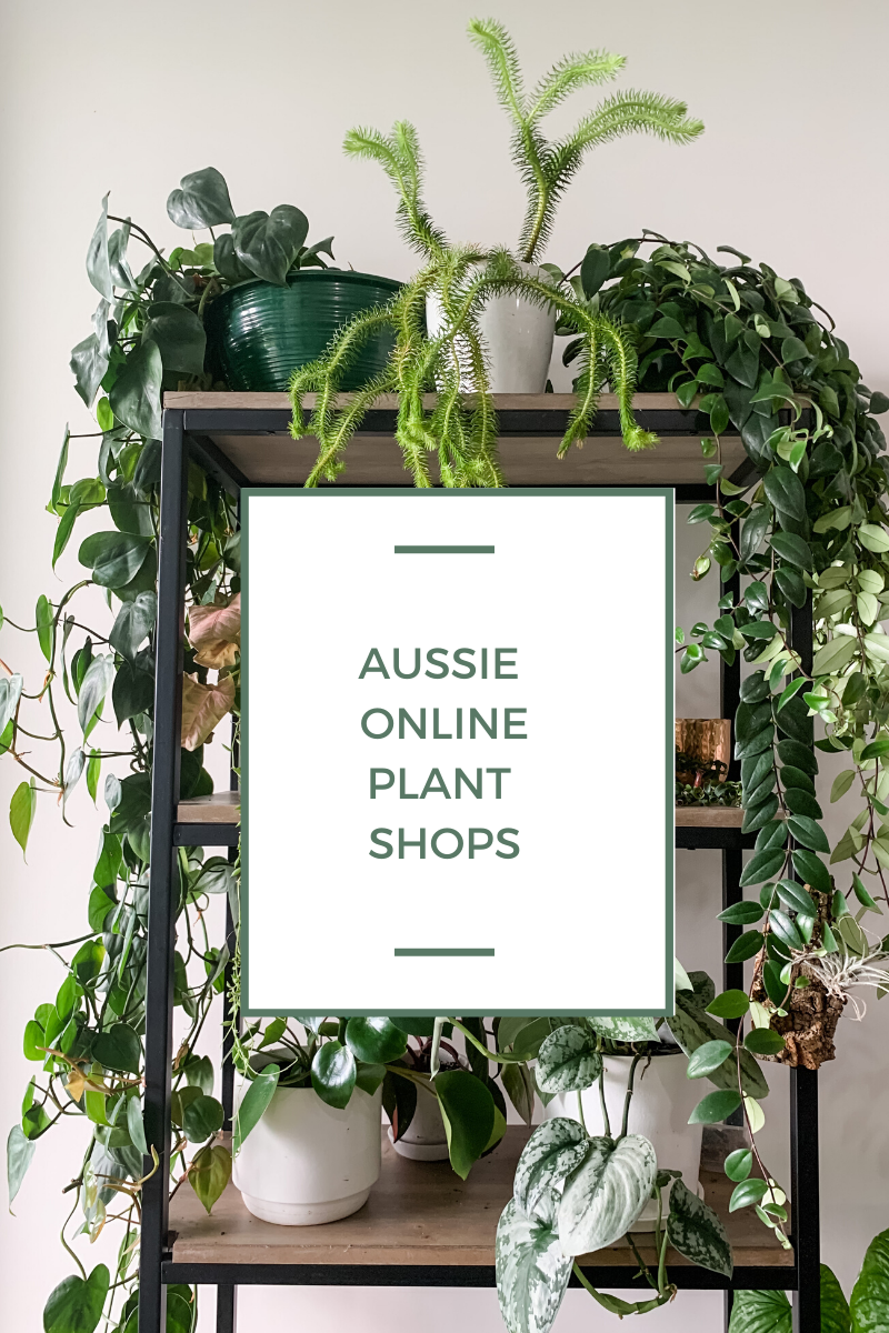 11 Of My Fave Aussie Online Plant Stores