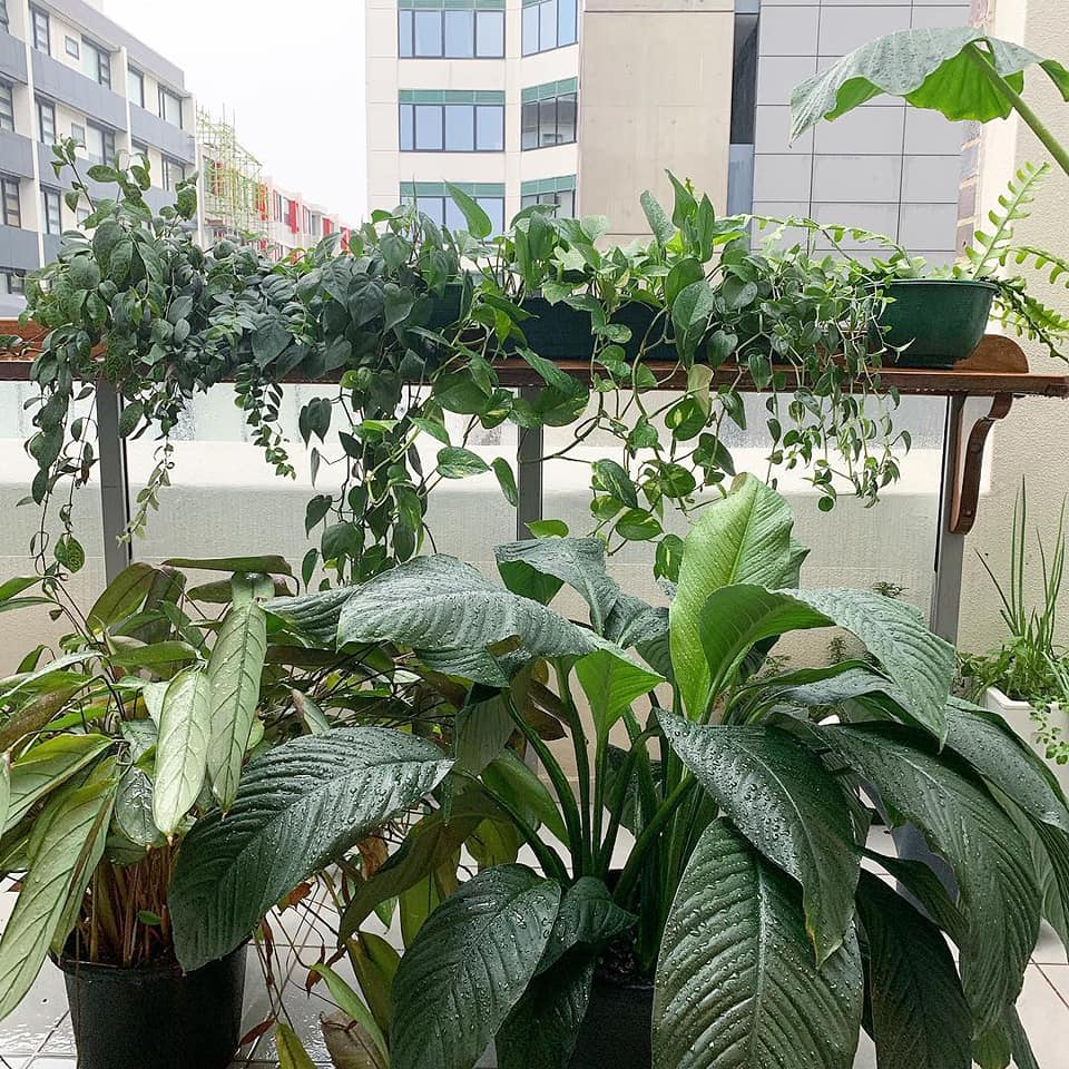 Why rainwater is the best water for your plant babies