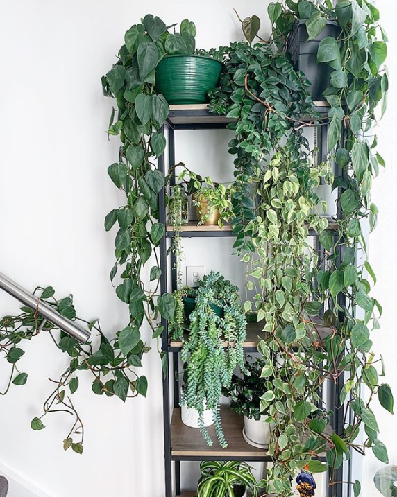 9 care tips for house plants during an Aussie winter