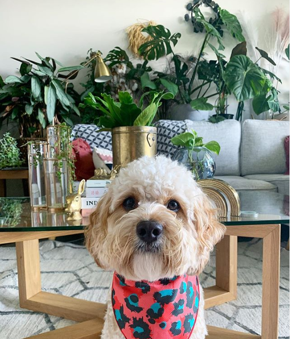 5 super cute pet friendly plants