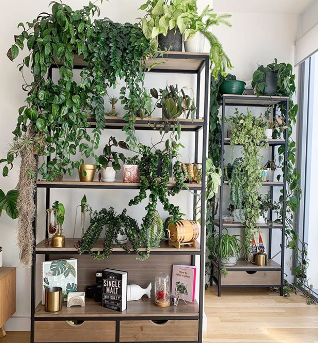 Creating the perfect plant shelfie